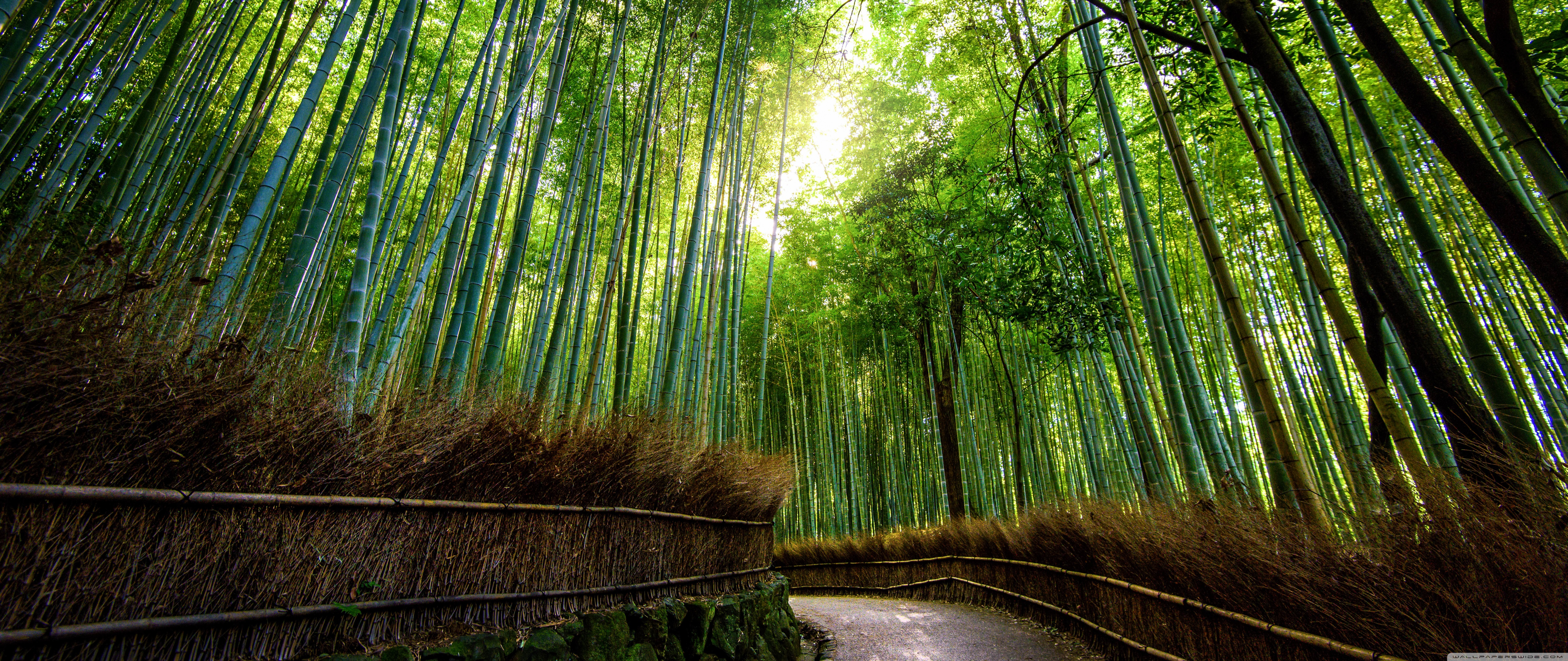 bamboo forest, kyoto, japan ❤ 4k hd desktop wallpaper for 4k ultra