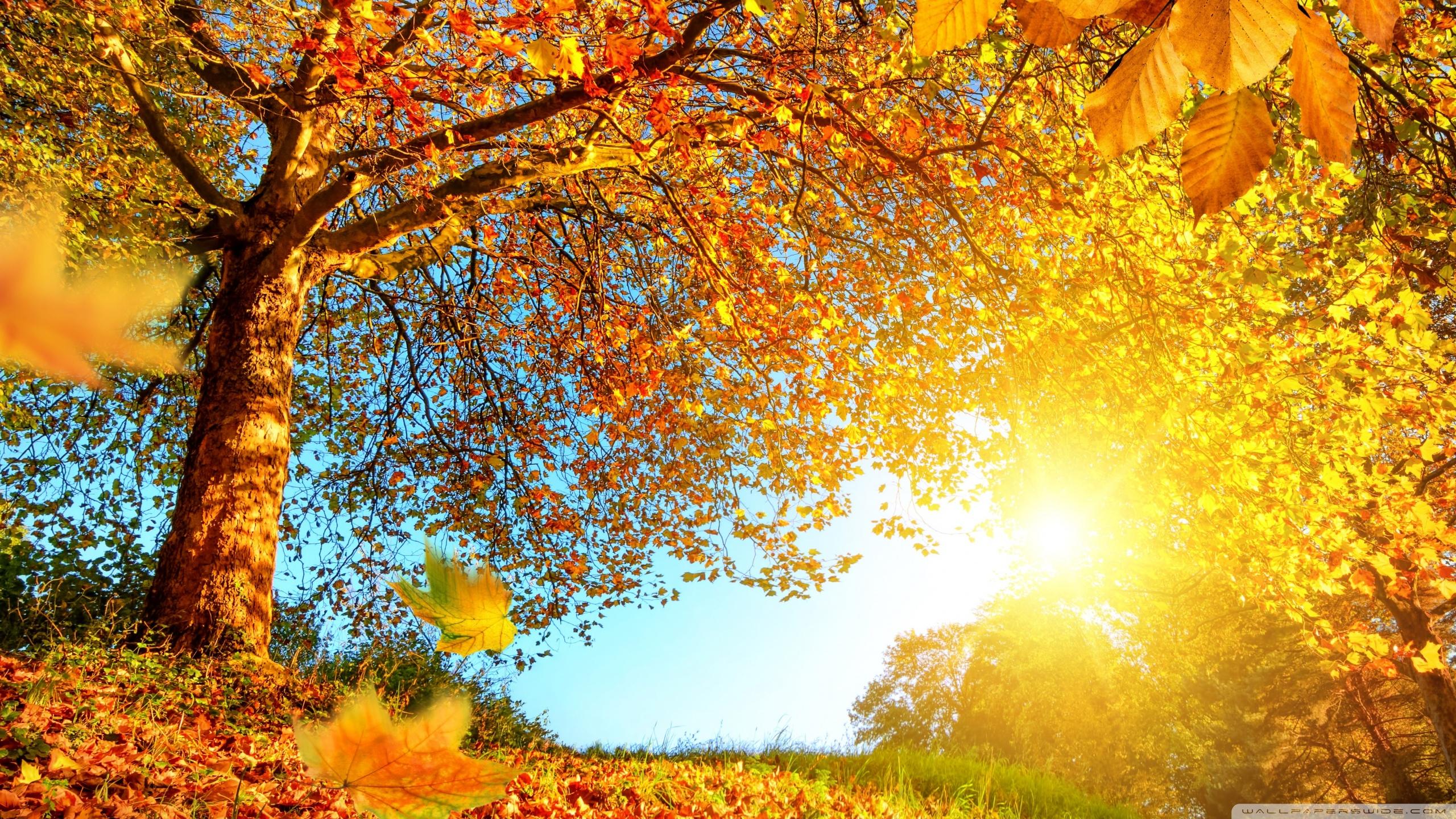 Beautiful Autumn Landscape 4K HD Desktop Wallpaper For 4K