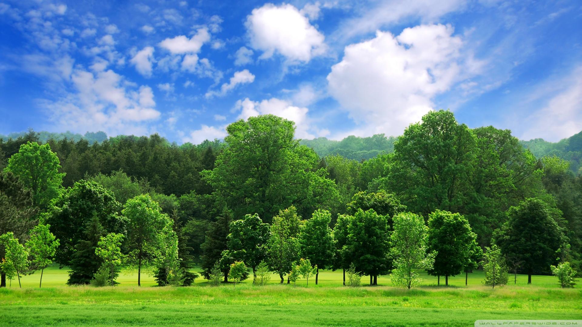 Beautiful Summer Landscape 4K HD Desktop Wallpaper For 4K