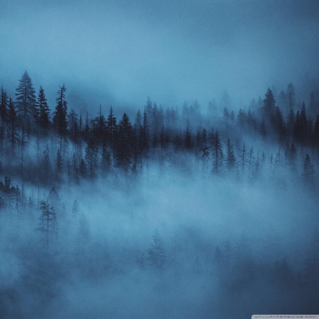 Dark Woods Aesthetic 4k Hd Desktop Wallpaper For Wide