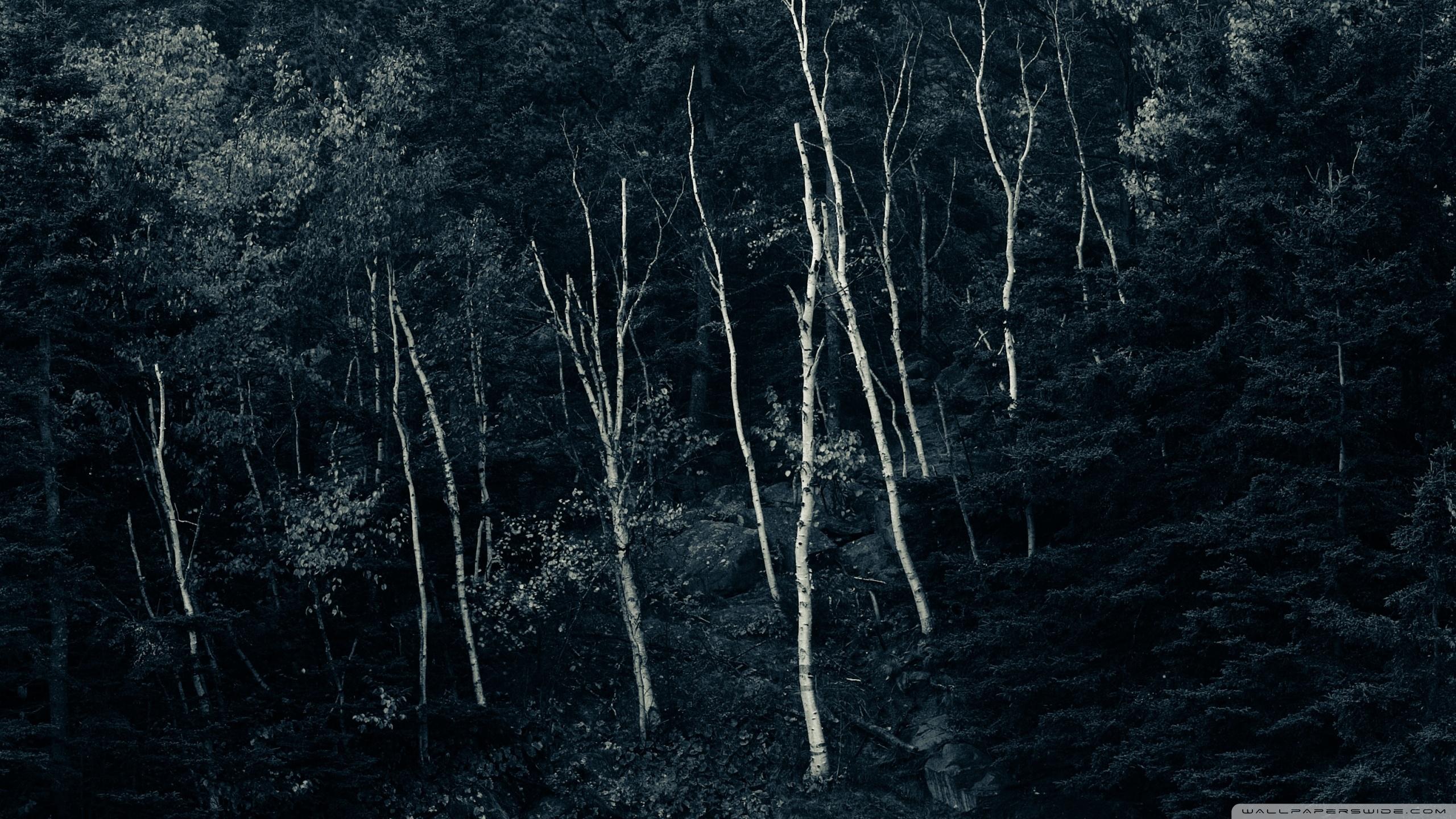 Forest Night 4k Hd Desktop Wallpaper For 4k Ultra Hd Tv