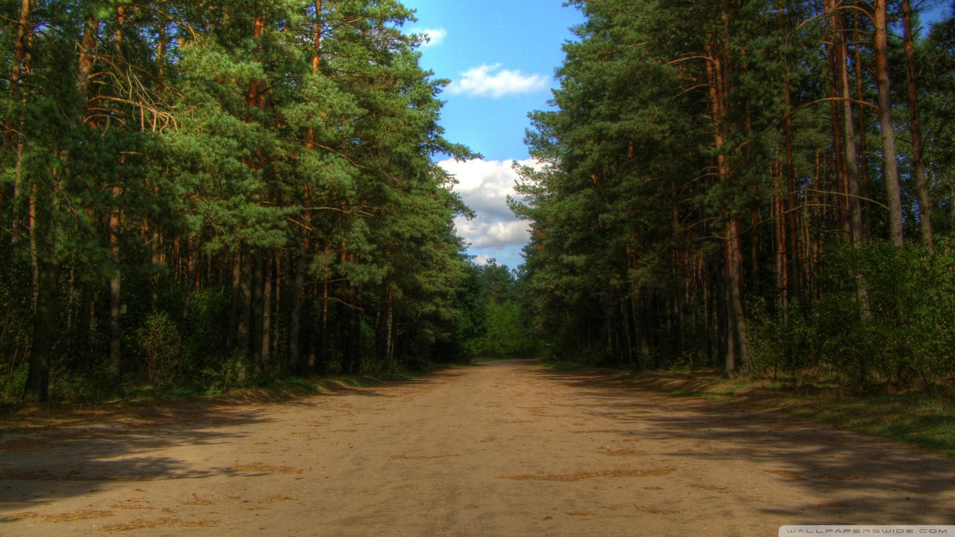 Forest Road 4k Hd Desktop Wallpaper For 4k Ultra Hd Tv