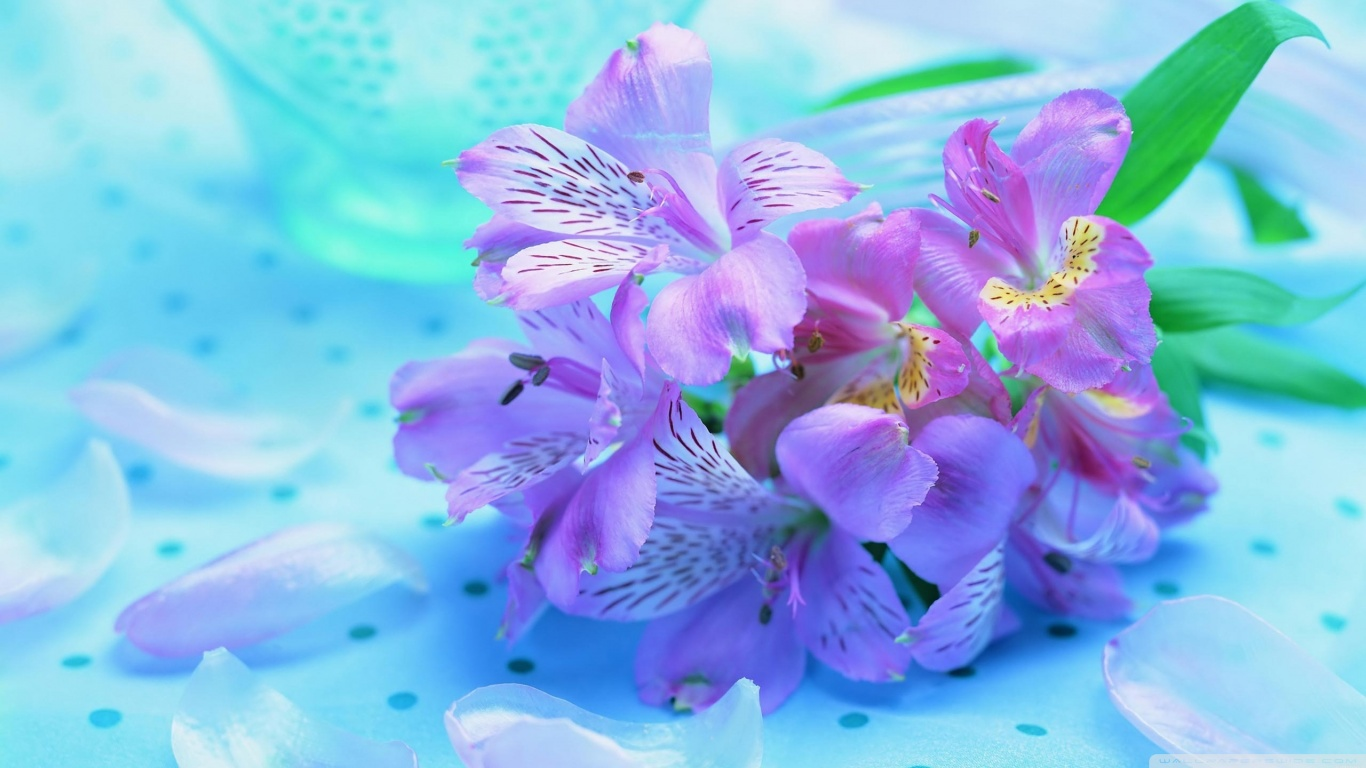 Light purple flowers 4k hd desktop wallpaper for 4k ultra hd tv hd 169 mightylinksfo