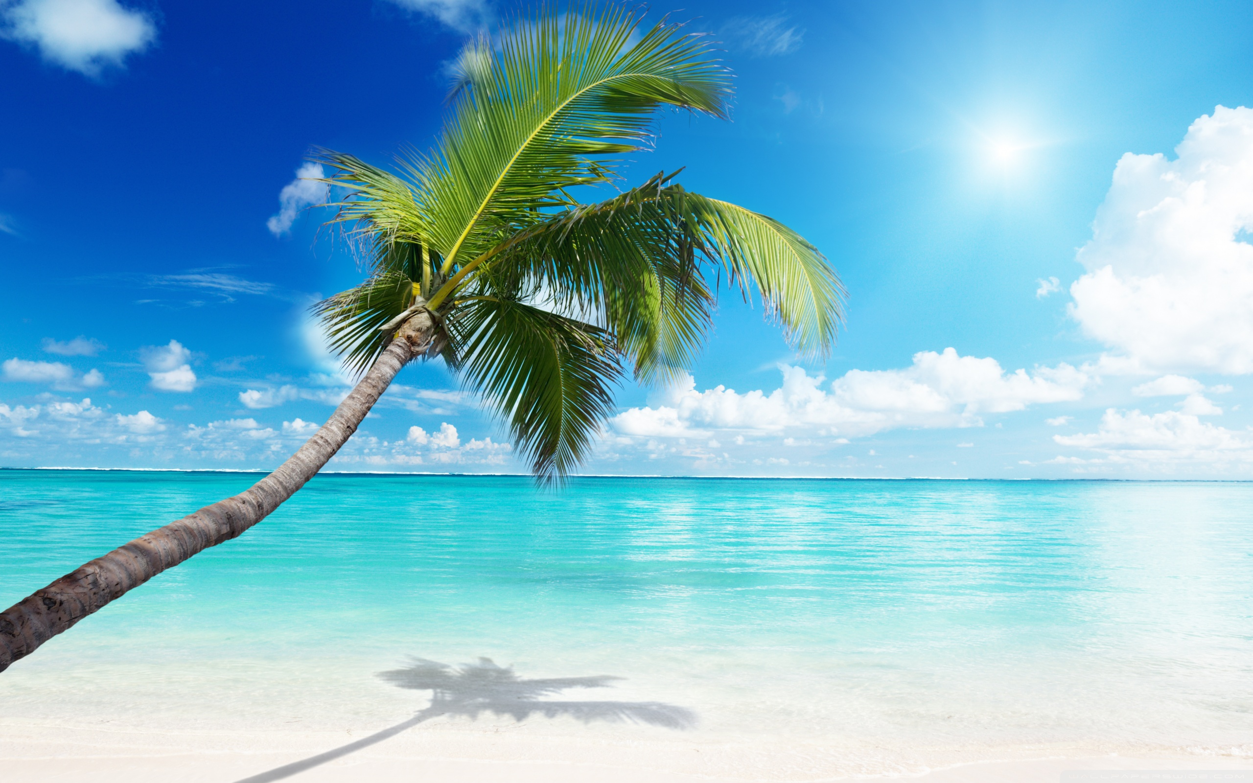 Palm Tree Beach 4k Hd Desktop Wallpaper For 4k Ultra Hd Tv: Palm Tree Beach 4K HD Desktop Wallpaper For 4K Ultra HD TV