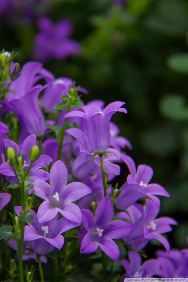 Pretty Purple Flowers 4K HD Desktop Wallpaper For Ultra
