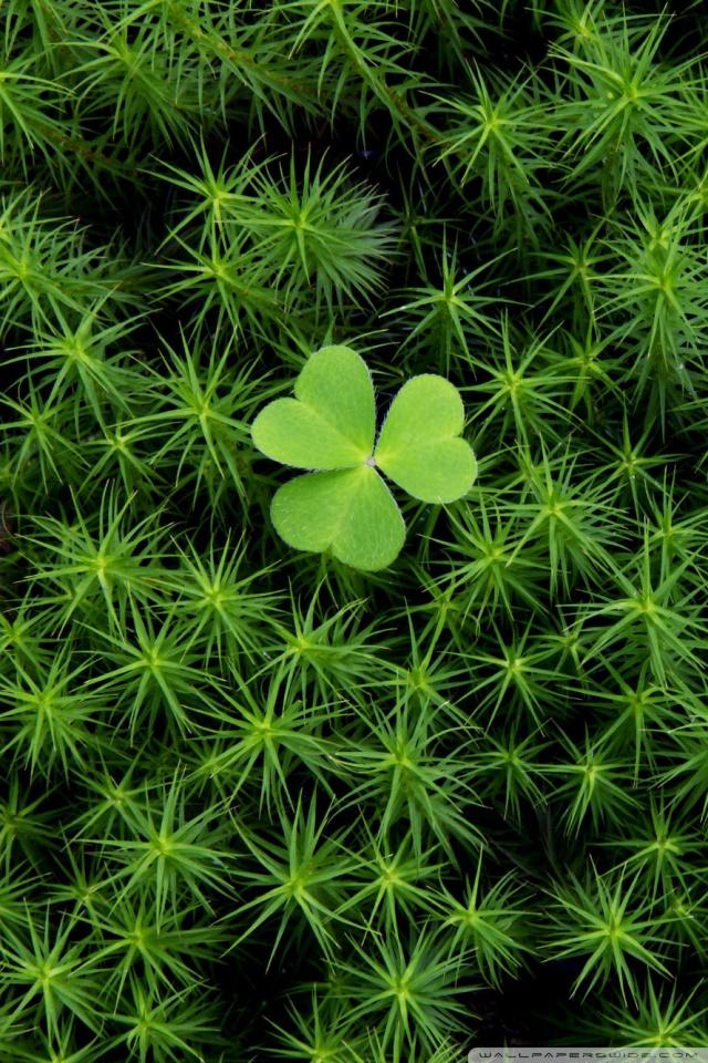 Shamrock And Irish Moss Ultra Hd Desktop Background
