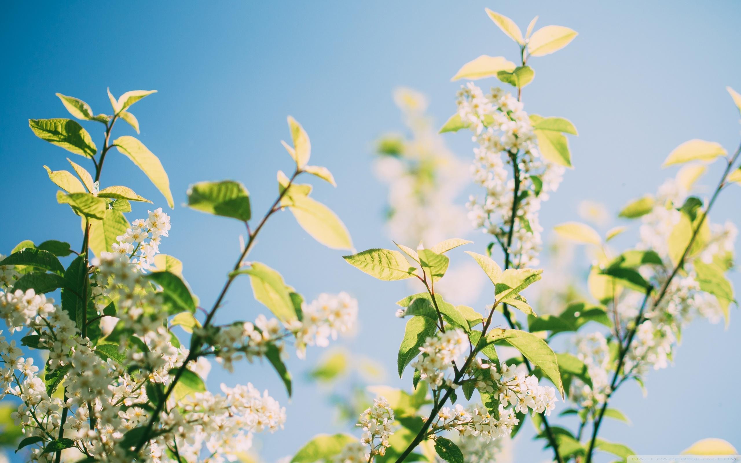 Spring Sunshine Tree Flowers Ultra HD Desktop Background ...