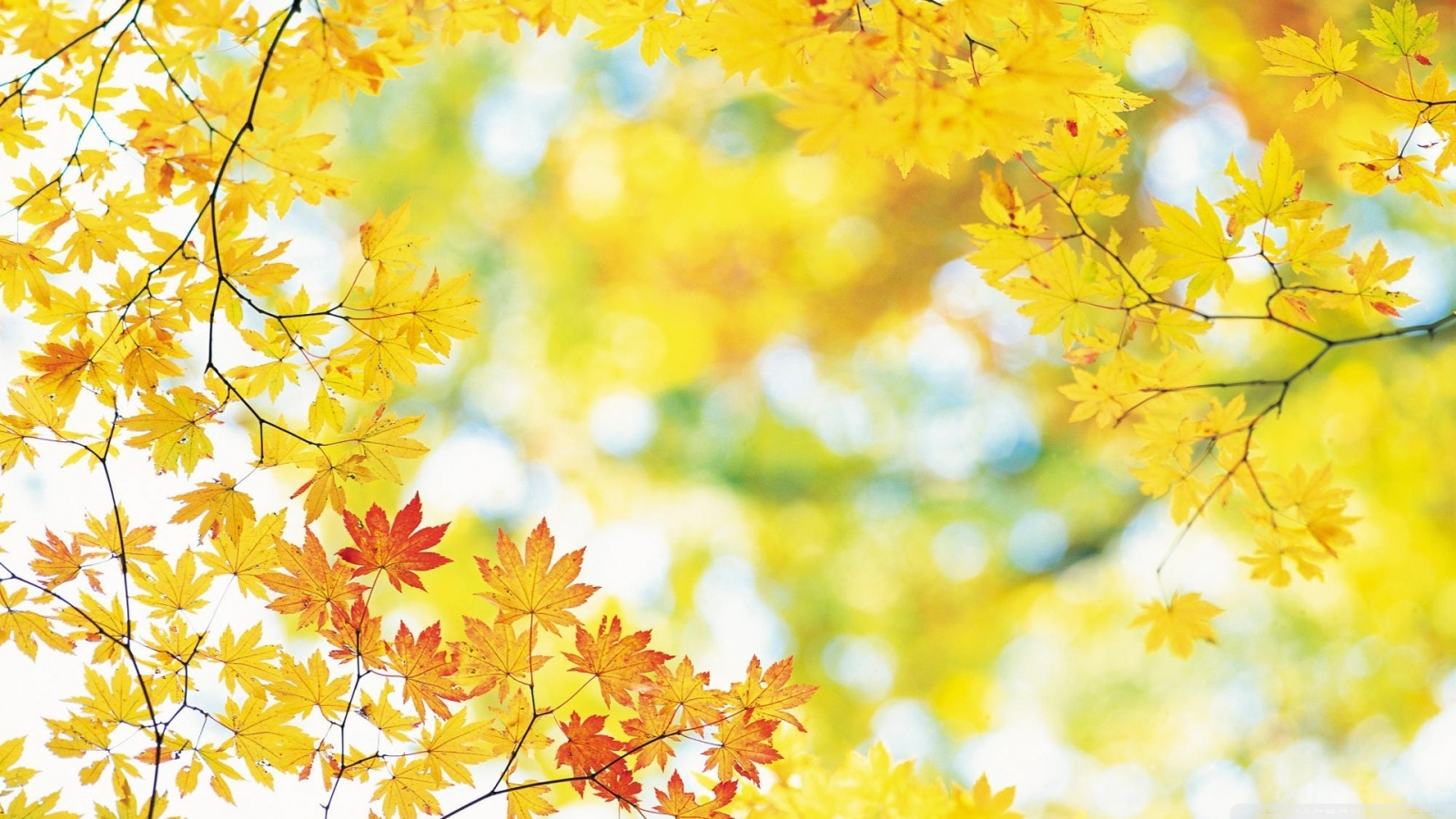 Autumn Leaf wallpapers (16 Wallpapers) - HD Wallpapers