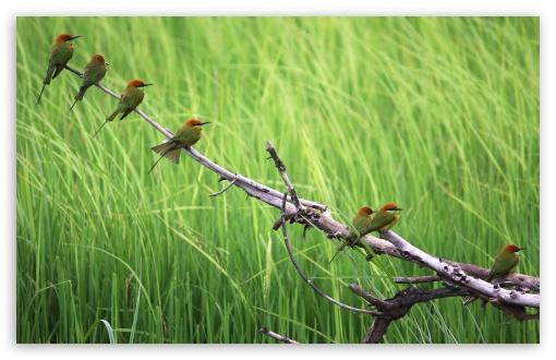 Beautiful Birds wallpaper for Wide 16:10 Widescreen WHXGA WQXGA WUXGA WXGA ;