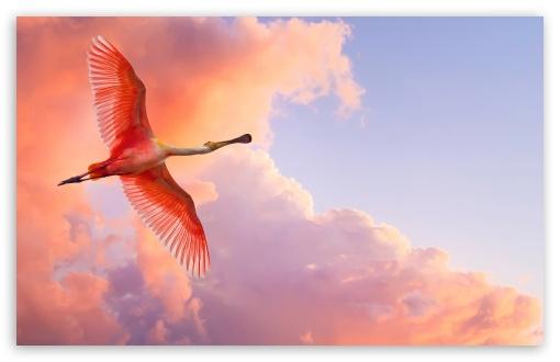 Priče za lep dan - Page 5 Beautiful_birds_flying-t2