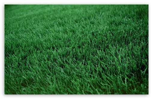 http://wallpaperswide.com/thumbs/fresh_cut_grass-t2.jpg