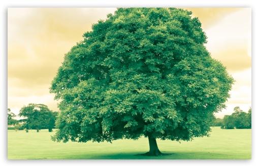 wallpaper green trees. wallpaper Green Tree And