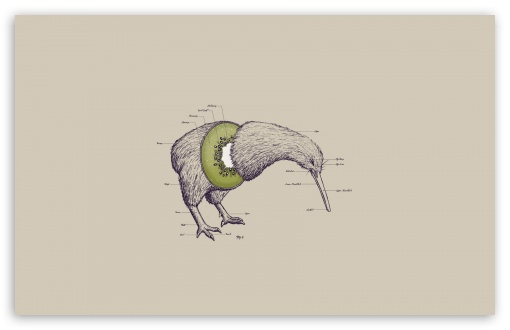Kiwi bird cut in half - photo#11