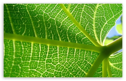 Download Wallpaper 1680x1050 Leaves, Plant, Veins, Light 1680x1050 ...