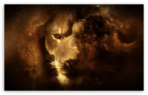 Lion wallpaper for HD 16:9 High Definition WQHD QWXGA 1080p 900p 720p QHD