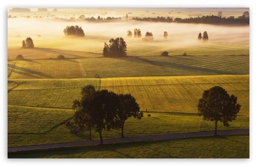 Morning Mist Meadow HD wallpaper for HD 16:9 High Definition WQHD QWXGA 1080p 900p 720p QHD nHD ;
