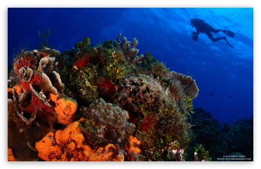 scuba diving wallpaper. Scuba Diving wallpaper for