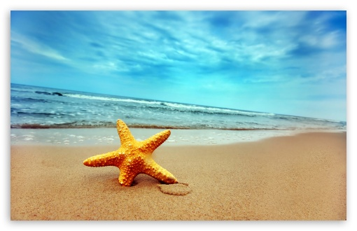 Starfish On The Beach Wallpaper For Wide 1610 Widescreen WHXGA WQXGA WUXGA