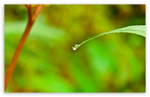 iphone 4 water drop wallpaper. 2 Water Drop wallpaper for
