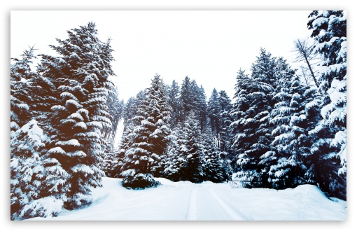 Winter Landscape Nature wallpaper for Wide 16:10 5:3 Widescreen WHXGA WQXGA